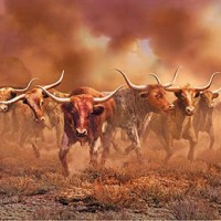 What the equity herd might look like