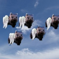 The Flying Wombat empties the pouch