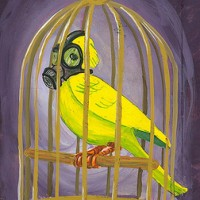 Is Provident Capital a canary?