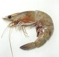 Treasury's tasty raw prawn