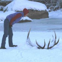 bull_elk_frozen_in_the_lamar_river_yellowstone_national_park_003