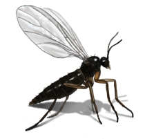 How To Kill Small Flying Insects In Kitchen