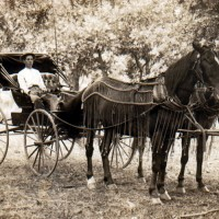 Horse_and_buggy_1910