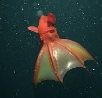 What does the squid think of Turnbull?