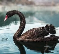 Soc Gen's five black swans for 2016