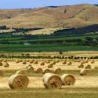 Why agriculture – not LNG or coal – matter for Australia