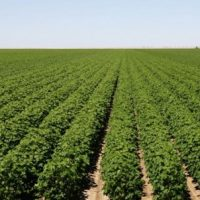 Nearly 90% of Aussies against foreign farm sales