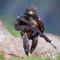 Markets rocked as Fed hawk takes flight