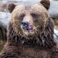 Bear's lick lips at ASX discounts nuthin'