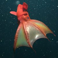 Vampire squid wraps tentacles around the Fed