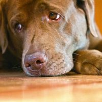 More consumer crunch as pet care craters