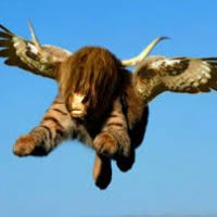 Return of the bullhawks