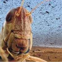 Property Council PM backs mortgage broker locusts