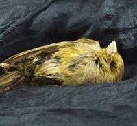 BOQ canary croaks on banks