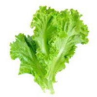 APRA releases new lettuce leaf