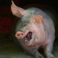 Gas cartel squeals like stuck pig