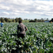 "Farm visas drive ""chronic exploitation"" of migrant workers"