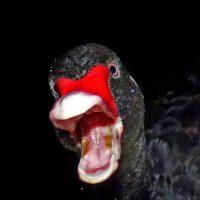 """Alibaba: COVID-19 """"black swan event"""""""