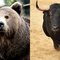 MB Fund podcast: Australian Housing Bear vs Bull debate with Dr Cameron Murray LIVE 12:30 AEST
