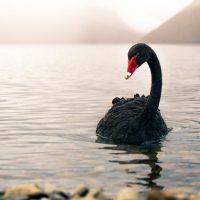 Is Brazil's runaway virus an iron ore black swan?