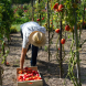 The great farm labour shortage lie